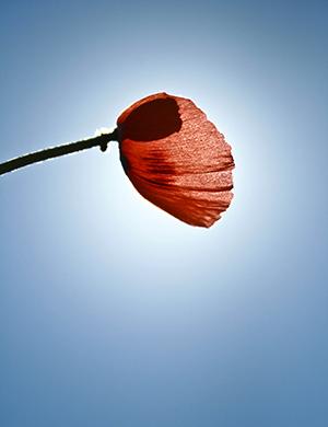 Flower-RZ